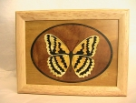 Marquetry Top Box (8 X 6) - 'The Butterfly' - Product Image