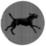 Black Lab Cinespinner Animated Suncatcher - Product Image