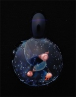 Copper Universe Pendant - Product Image